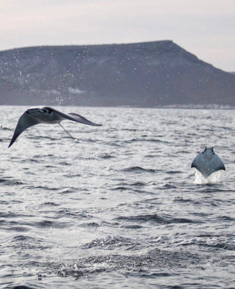 Impactantes fotografías de la vida marina, un mundo bajo el agua repleto de magia - foto-8-dia-del-oceano-google-dia-del-oceaon-mar-playa