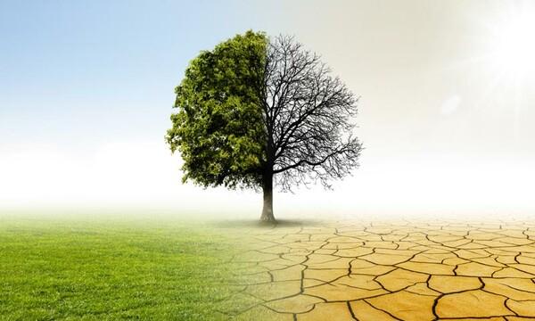 10 imperdibles documentales para reflexionar en el Día Mundial del Medio Ambiente
