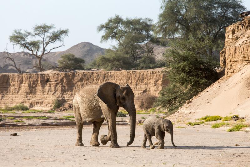 Traveler 101: la auténtica guía para viajar a África este verano - cc-2547-hoanib-06-2014
