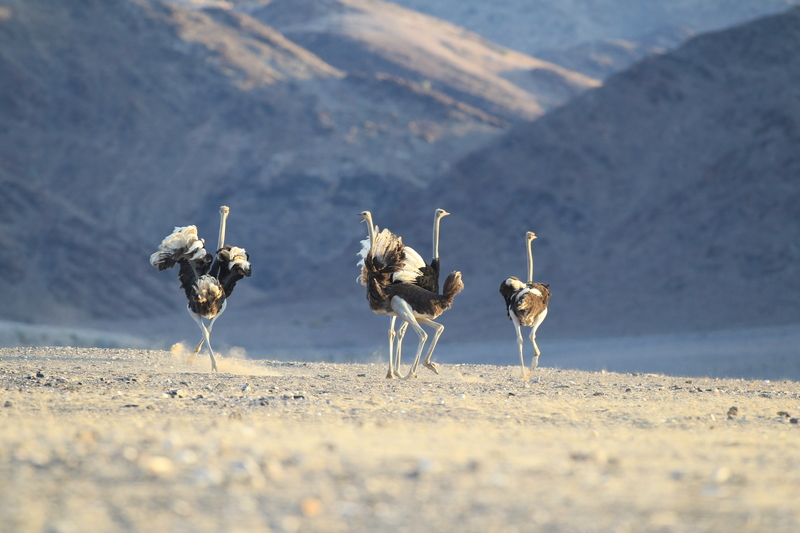 Traveler 101: cómo planear tu próximo viaje a África con Wilderness Safaris - dr-flip-standerdlc-07