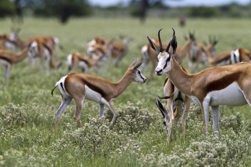 Traveler 101: cómo planear tu próximo viaje a África con Wilderness Safaris - mg-5489