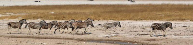 Namibia, el esplendor del desierto - captura-de-pantalla-2021-08-11-a-las-122613