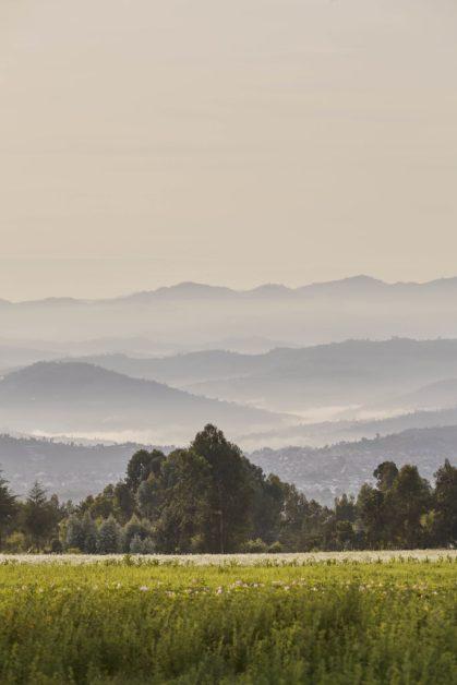 ¡Descubre Ruanda! Los #HOTspots que no puedes dejar de visitar en este gran destino - oo-gorillasnest-flora-fauna-sunrise-mountains-2604-master
