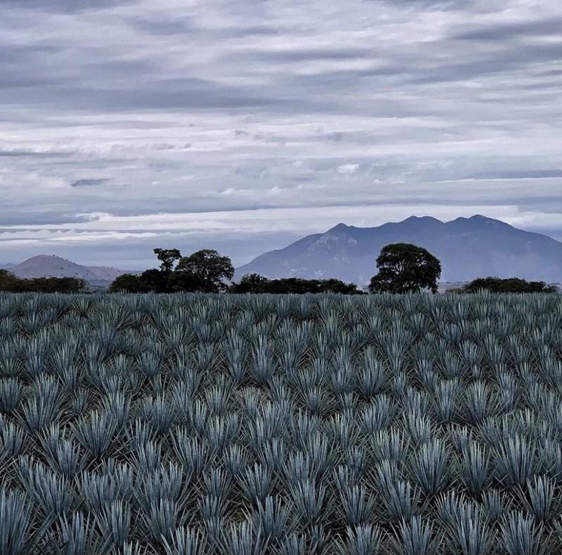 Jose Cuervo Express: un tour por la ruta del tequila - jose-cuervo-express3