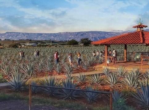 Top 6: pueblos mágicos que deberás conocer este 15 de septiembre - tequila-jalisco-pueblos-magicos