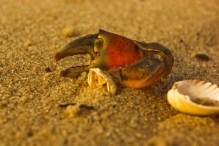 Krabbenreste