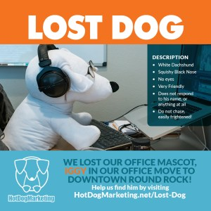 Iggy-lost-dog