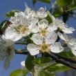 fleur-cerisier-hotel-au-relais-de-l-ill-small