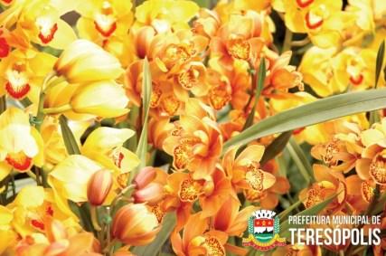 O clima de Teresópolis é perfeito para a produção desta belíssima planta.