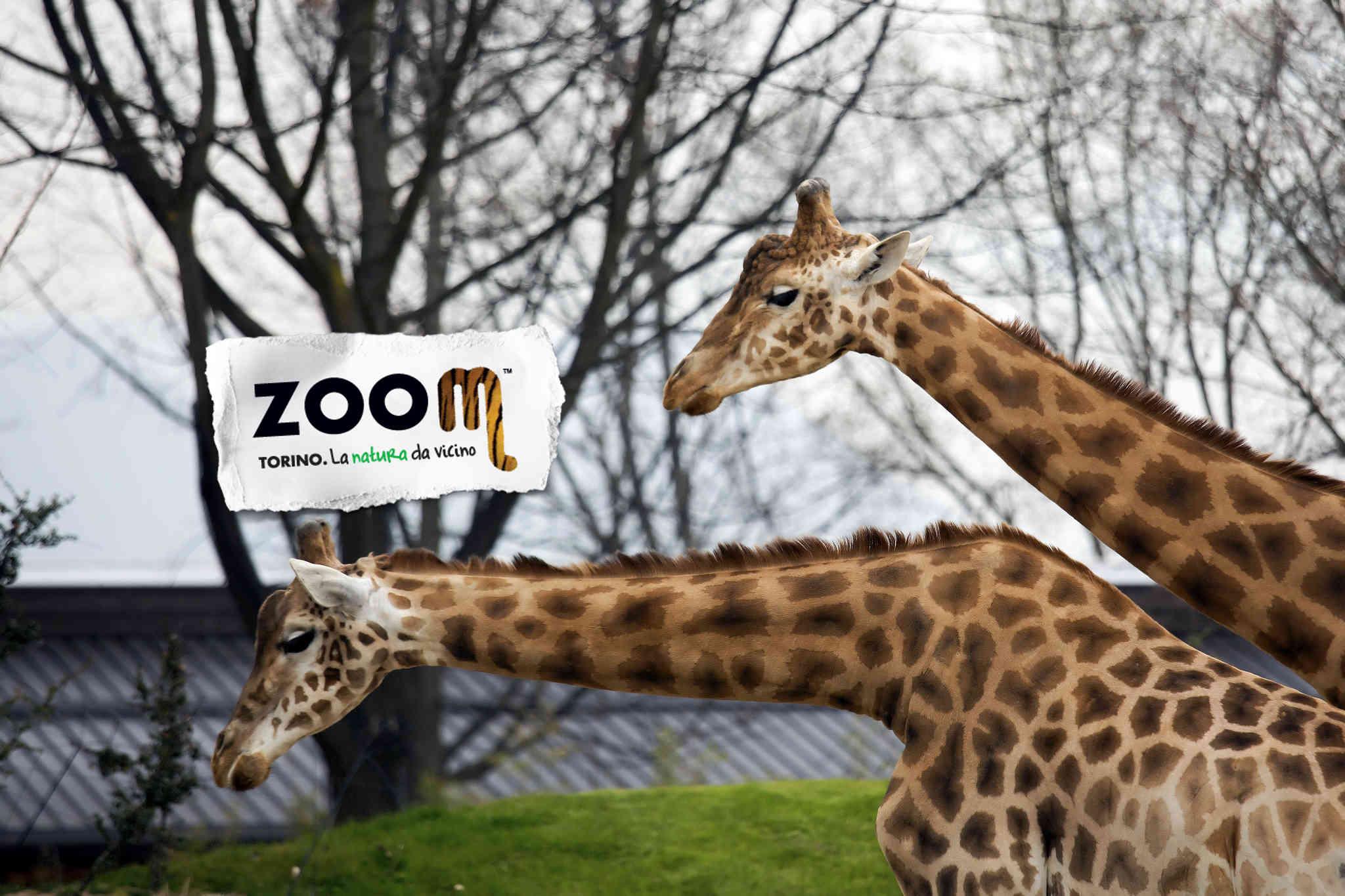 Animali africani e asiatici zoom di Cumiana Torino offerte famiglia