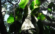 Parque Eco-Arqueologico Los Naranjos