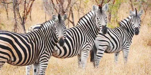 79_Londolozi-Lodge_Afrique-du-Sud_02