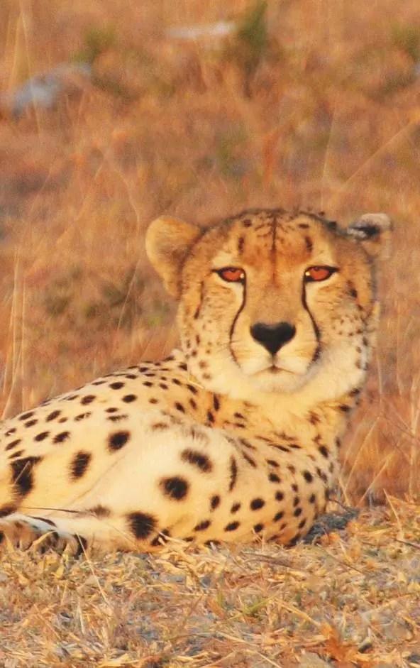 79_Londolozi-Lodge_Afrique-du-Sud_03