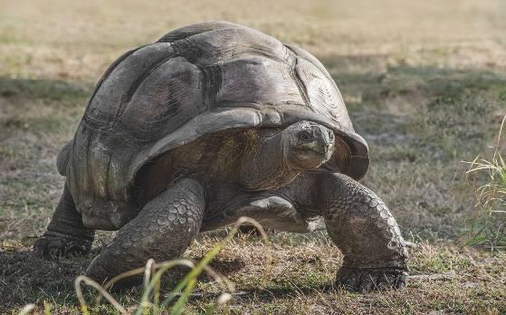 74-ile-privee-seychelles-desroches_Page_7_Image_0004