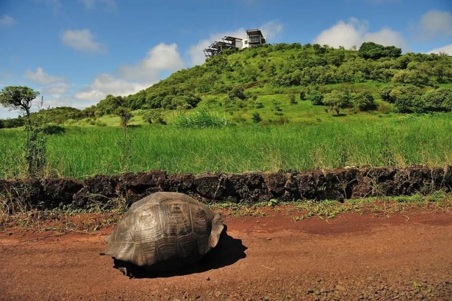 81-Pickaia-Galapagos_04