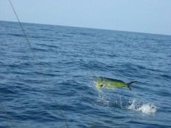 Pesca Ixtapa Zihuatanejo (29)