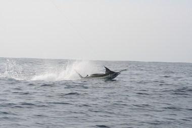 Pesca Ixtapa Zihuatanejo (37)