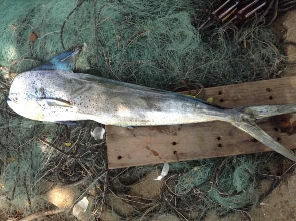 Pesca Ixtapa Zihuatanejo (48)