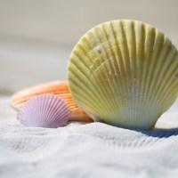 Günstig in die Ferien: Frühbucher-Rabatt oder Last Minute?