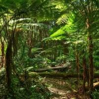 Nationalpark Sierra del Divisor - bedrohte Heimat der Matsé