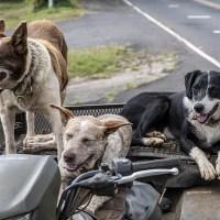 Wenn Hunde in den Urlaub fahren