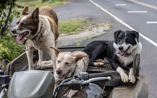 Mit mehreren Hunden verreisen