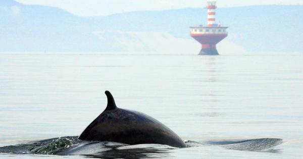 Forfait Croisière aux baleines à bord du AML LEVANT   Hôtel Rimouski