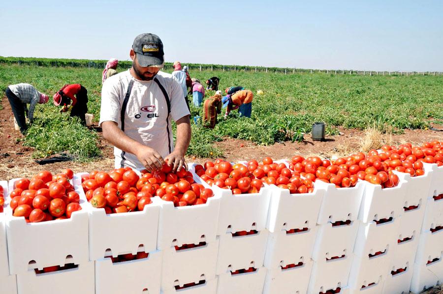 صادرات السلع الزراعية