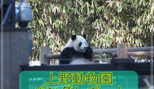 上野動物園の土曜日の混雑は凄かった?パンダレポート&感想を公開!