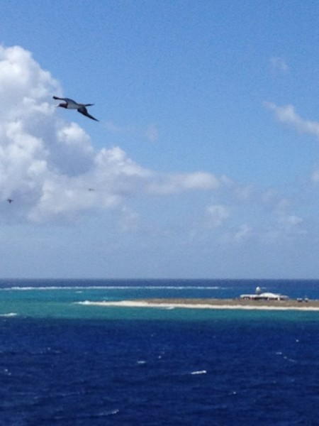 Another bird.  The Island attracts a lot of Boobys and