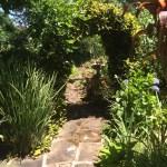 A Suburban Backyard
