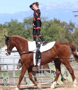 Equestrian Unitard Custom