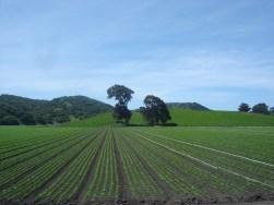 Greenfield_California