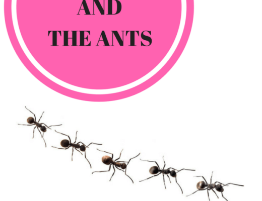 Hot Mess and the ants