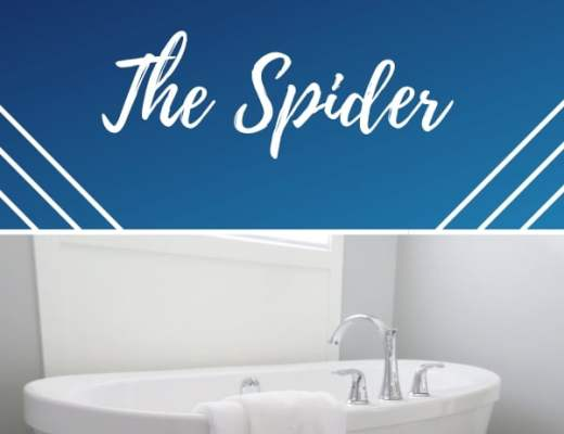 spider in the shower