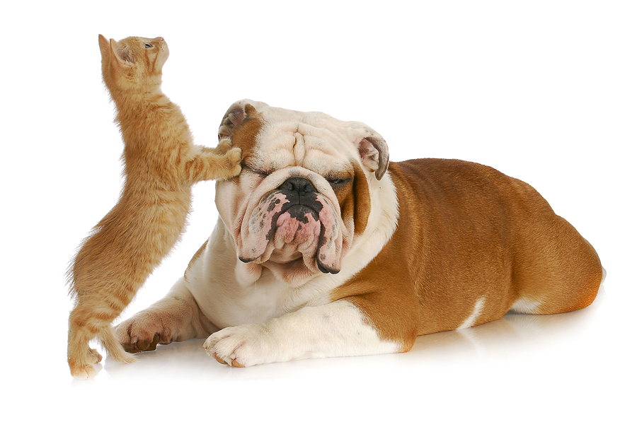 pet cats pictures