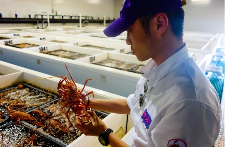 数吨活龙虾滞留中国机场,这回我国把话挑明:食品安全不让步