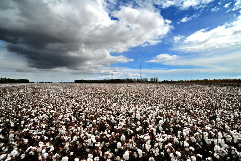 为什么是新疆,为什么是棉花?用一个大背景和两个小细节揭露美国