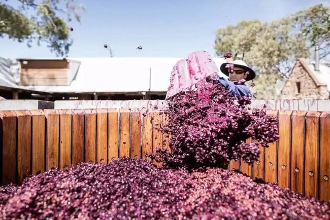 中国对澳第三次制裁来了,对澳红酒征收反倾销税,切断出口生命线