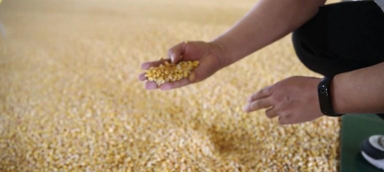 美国农业离不开中国?全球粮价大涨,中国风平浪静还拯救美国农民
