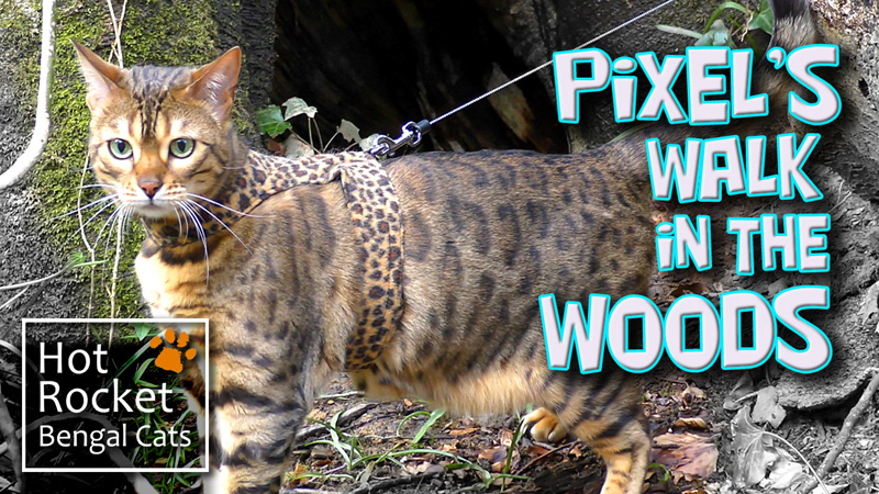 Pixel's Walk in the Woods
