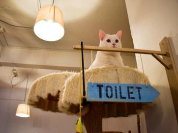 PEBBLES KITTY CAT CAFÉ ROTTERDAM