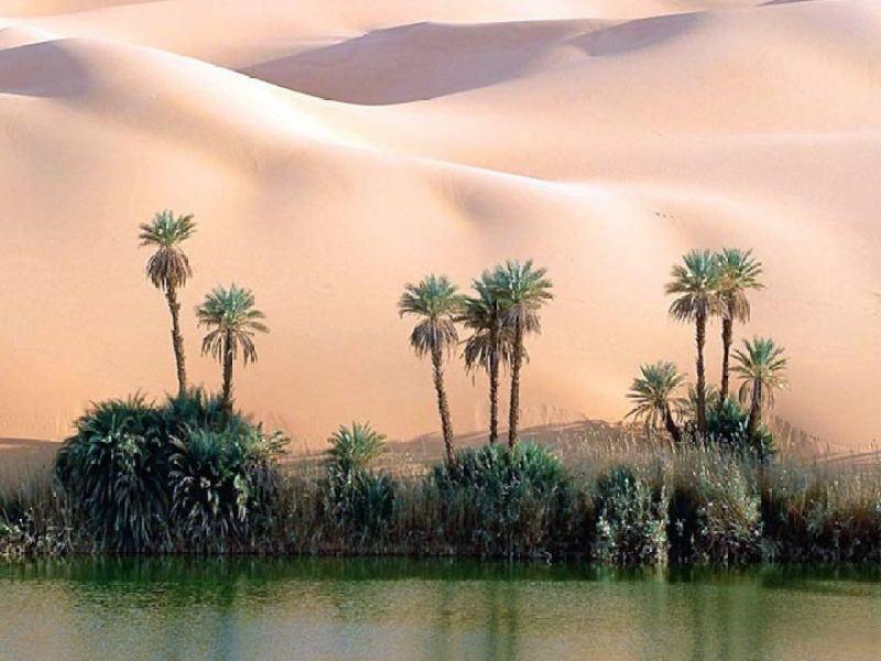 Отдых в Тунисе июньпустыня оазис