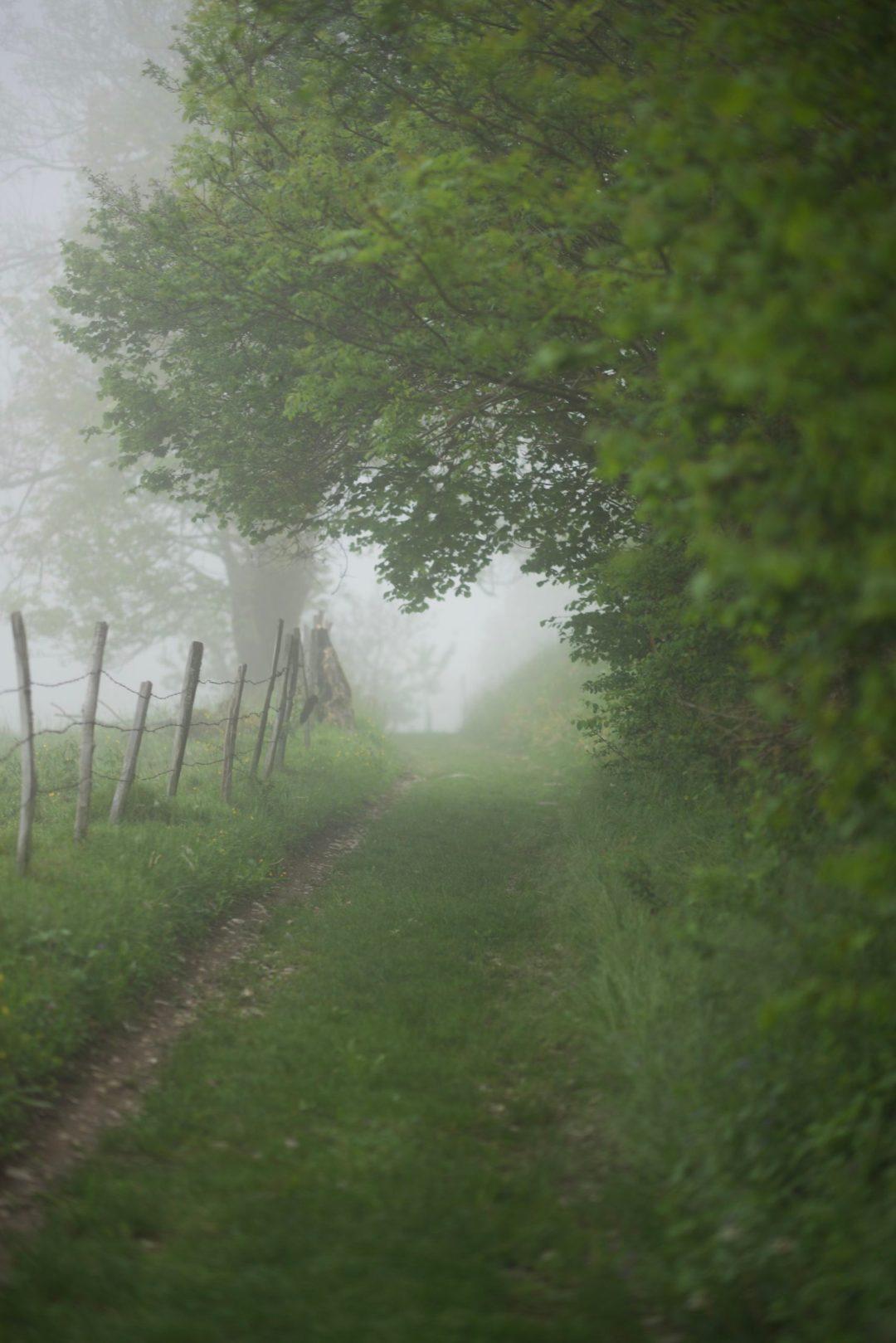 Chemin de campagne des Bauges dans la brume