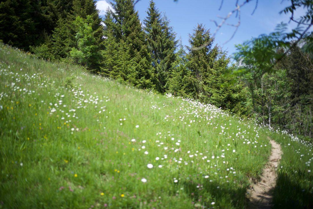 Sentier dans les montagnes des Bauges au dessus de Doucy