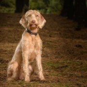 camberley dog photographer