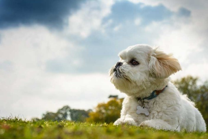 camberley dog photographer