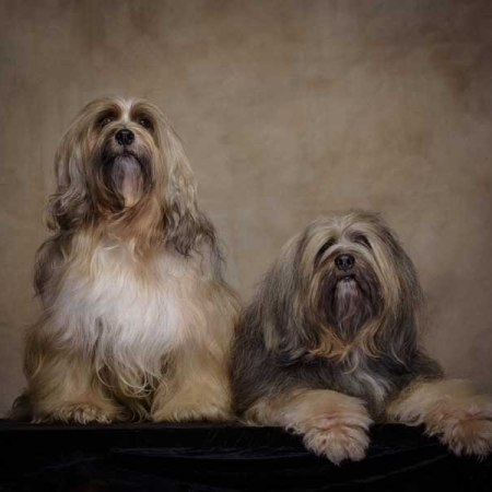 guildford dog photographer