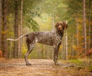 Master Photographer Association 2017 - Merit Award - Pet Portraits