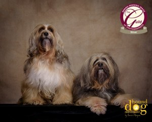 dog photographer tibetan terrier association